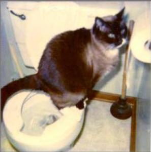 Toilet Trained Cat and Megacolon Information